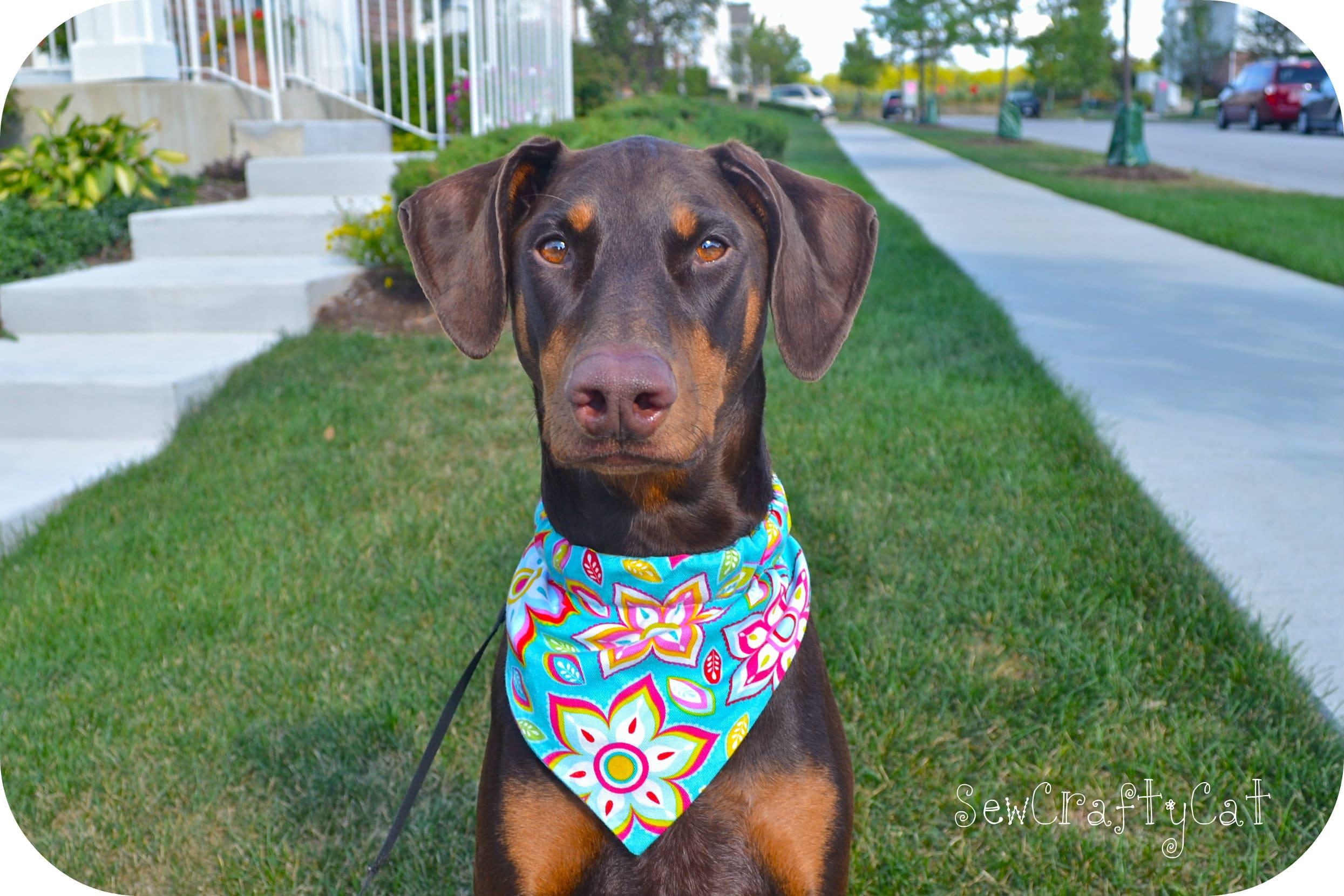 Dog Collar Bandana Photo Shoot