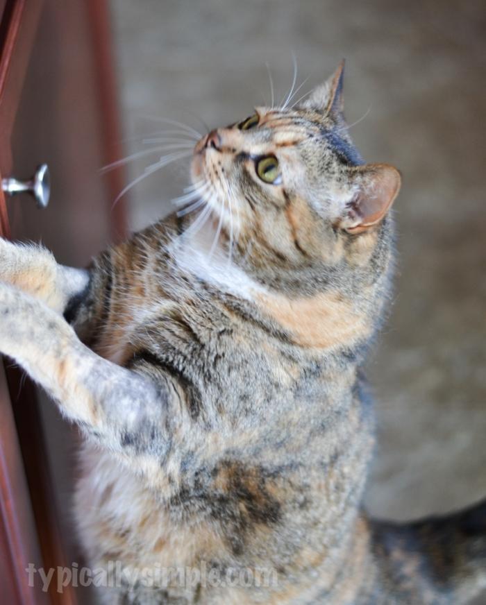 Cat Dish Placemat Tutorial