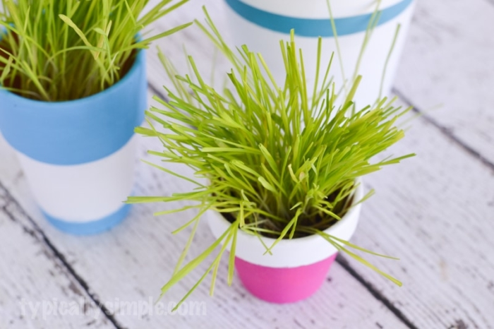 DIY Cat Grass Pots-8