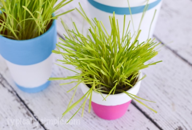 This simple tutorial shows you how to paint terracotta pots to create an indoor cat grass garden for your cats! A DIY project your cats are sure to love! #NutrishCatCrafts #ad