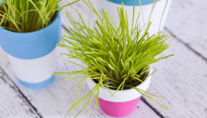 DIY Indoor Cat Grass Garden